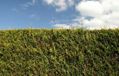Thornleigh Lawn Mowing Hedge Care Services